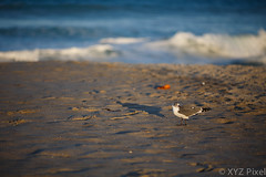 3A4A5320 (XYZ Pixel) Tags: beach canon florida mark iii melbourne 5d 135mm 135l f2l 5d3