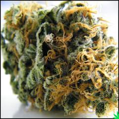 Macro Bud Shot (cannabisdestiny) Tags: bud marijuana cannabis trichomes legalizeweed420photographydankmacrobudbud