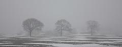 Three trees in snow, Woolley (Anita K Firth) Tags: trees winter snow tree misty grey three snowing woolley poorvisibiity