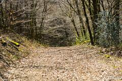 Weg zur Unterwelt (Ch.Neis) Tags: france tree nature grass reflex nikon natur 23 1855mm nikkor arbre baum creuse herbe limousin dx d5200 photographedandcopyrightbychristophneis stpierrecherignat