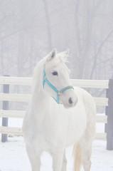 Trinket high key (twhrider) Tags: horses bigmomma flickrchallengegroup flickrchallengewinner challengegamewinner nikond7000