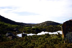 A Tarn (stephanie.young1984) Tags: trees landscape nationalpark russell falls alpine tasmania wilderness tarn glaciallake nothofagus mtfield