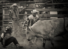 dude SERIOUSLY... (angelnfreefall) Tags: cowboys danger cattle horns bulls arena rodeo bullriding bucking bullriders probullriders windyacresarena
