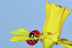 Spring.......When Love Blooms (pallab seth) Tags: park flower macro london spring