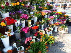 Flowers (petrusko.rm) Tags: vienna street flowers colors lumix austria panasonic fz200