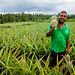 Zanzibar Man Grows High-Value Pineapples