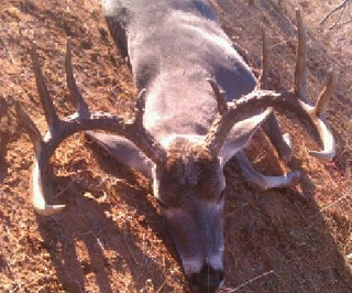 Texas Free Range Whitetail Hunt - Cotulla 35