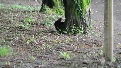 DSC_3350 (mavnjess) Tags: 15 june 2016 vicenza italy italia coniglio coniglios rabbit rabbits bunny bunnies