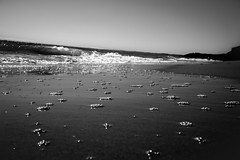(Ails N hgeartaigh) Tags: beach beaches beautiful sea seascape waves suds ireland wexford land landscape sand sandy blackandwhite bw noir blanc et world earth summer mono monochrome 2016 sony sonya7 a7 zeiss za europe