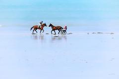 Two meet Ten (zebrazoma) Tags: course race racecourse hippique horse cheval chevaux plage beach sand sable lancieux ploubalay bretagne britany hippodrome tc20eiii saintsieu nikonflickraward
