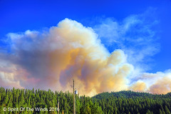 Forest Fire (jimgspokane) Tags: forestfires forests mountains camping idahostate trees fires excapture