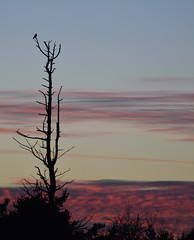 Sunset 4 (glenbodie) Tags: glen bodie glenbodie reifel