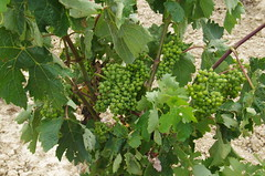 IMGP8529 (Lucifer's Gaze) Tags: pentax k5  spain summer   winery  vinyard  cellar  rioja docarioja  sierradetolono