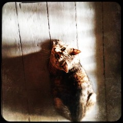 image (Nblondine) Tags: graycat littlefriend
