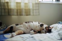 E Meow's life (Steve only) Tags: kodak retina iiic type 021 schneiderkreuznach retinaxenon f250mm 502 50mm f20 foldingcamera  fujifilm 100 100 film epson gtx970 v750 e cats