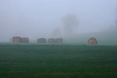 Hay rolls in the fog (Nikon Guy 56) Tags: fog hayrolls mingocreek nikon d60
