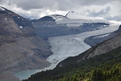 Saskatchewan Glacier from Parker RIdge (barry gahan) Tags: canada canadianrockies icefieldsparkway
