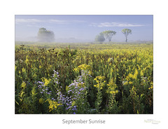 September Sunsrise (baldwinm16) Tags: il illinois midwest prairie sunrise autumn fall september goldenrod aster yellow gold fog morning nature natureofthingsphotography