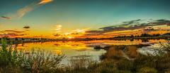 Sunset Over Sawyer Pond (http://fineartamerica.com/profiles/robert-bales.ht) Tags: facebook gemcounty haybales idaho lakeorpond people photo photouploads places scenic states sunrisesunset red emmett sawyerpond fishing family twlight golden cattails reflections layered weeds treessilhouette sunrise sunset treasurevalley lake pond water landscape canonshooter wow stupendous superb tranquil sun reflection sky nature light color evening scene beauty blue summer colorful beautiful cloud serenity sunshine yellow scenery horizon sunlight peaceful robertbales iphone