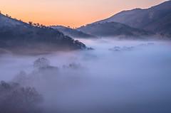 treetops (Marc Crumpler (Ilikethenight)) Tags: california morning trees winter usa fog clouds sunrise landscape shadows pentax hiking trails hills bayarea eastbay k5 ebr
