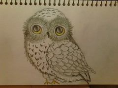 I draw too. (Cindy's Picture-Book) Tags: animals drawing owl pencildrawing owldrawing flickrandroidapp:filter=none