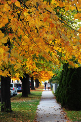 916-03 (Joe-Lynn Design) Tags: autumn tree fall winnipeg