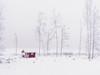 Misty winter day. (Bessula) Tags: winter mist lake snow tree nature hut photomix bessula bestcapturesaoi magicunicornverybest magicunicornmasterpiece jesuscmsfavoritesgallery bestevercompetitiongroup creativephotocafe