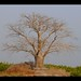 Sine Saloum - Senegal 2013