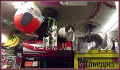 Le chat de l'picerie arabe / The cat of the Arabian grocery (Explored) (Zinaida Beaumont (nearly on holidays)) Tags: paris france cat chat ballon balloon montmartre banana garland cocacola banane grocery gatto guirlande katz kindersurprise schweppes picerie ventilateur tinselgarland friendsofzeusphoebe