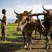 ©FAO/Sarah Elliott / FAO