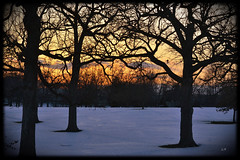 SUNSET (Lisa Plymell) Tags: trees sunset orange sun snow cold nature landscape branches sunsets kansascity missouri amature fav10 mygearandme mygearandmepremium mygearandmebronze mygearandmesilver mygearandmegold d3100 rememberthatmomentlevel1 rememberthatmomentlevel2 rememberthatmomentlevel3