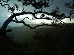 Serenity is Steep (John.Johnson.15) Tags: sunset shadow tree hawaii climb is glow oahu sweet dusk glory magic silouette hike ridge trail kai serenity hawaiian waimanalo windward ascend nei alii magestic kuliouou koolaus grouup