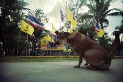(Pinoko_am) Tags: animal animals thailand xpro phuket     vivitarultrawideandslim