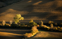 Golden Light (Philipp Klinger Photography) Tags: italien trees light sunset shadow italy orange brown tree nature field yellow landscape gold golden evening leaf nikon warm italia shadows earth hill warmth hills val tuscany tele toscana valdorcia leafs philipp rolling rollinghills d800 toskana gallina castiglione dorcia klinger orcia campiglio roccadorcia castiglionedorcia dcdead nikond800 philippklinger campiglionedorcia