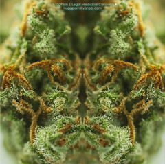 Nugg Mirror (NuggPorn | Legal Medicinal Cannabis of California) Tags: plant macro art mirror weed medicine marijuana maryjane cannabis medicinalcannabis nuggporn