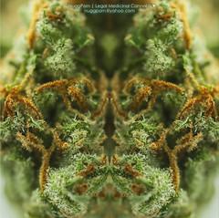 Nugg Mirror (NuggPorn | Legal Medicinal Cannabis of California) Tags: plant macro art mirror weed medicine marijuana maryjane cannabis medicinalcannabis nuggporn