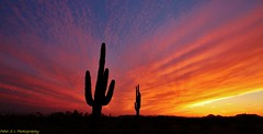 Sunset in Phoenix (Photography Peter101) Tags: sunset arizona cactus nature canon top25naturesbeauty