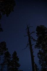 The Big Dipper (Juho Holmi) Tags: sky tree tower standing suomi finland stars observation dead star dc big finnland pentax sigma tampere starry plough k5 finlandia dipper kangasala 1770mm f2845 pirkanmaa haralanharju