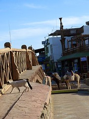 "puente de Dahab • <a style=""font-size:0.8em;"" href=""http://www.flickr.com/photos/92957341@N07/8590592861/"" target=""_blank"">View on Flickr</a>"