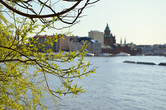 Spring in Helsinki (fede_gen88) Tags: sea church water suomi finland spring helsinki nikon dof cathedral branches baltic depthoffield orthodox tervasaari uspenski d5100
