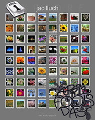 5,668 of jacilluch's photos have been in Explore ***