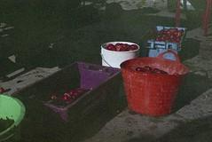 . (dichohecho) Tags: film analog somerset apples analogue pentaxmesuper fujisuperia400 ciderpressing roll59 dichohecho