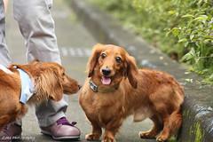 Dog's talk (Taipei street life) Tags: dog pet canon paw bark conversation curiosity animalplanet ef 6d 100300