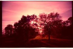 3 people in an Ashton Court sunset (-ciaran) Tags: autumn trees sunset leaves bristol lomo lca xpro lomography crossprocess cosina vignette redshift zenith lowsun ashtoncourt colourshift sensia100f rakingshadows