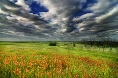 Flowers and Clouds (Tom Haymes) Tags: flowers industry clouds landscape vineyard texas redflowers industrytexas paradoxvineyard