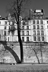 Ombres du bord de Seine (Maria D._Foto) Tags: paris france building muro wall seine nikon ombre albero mur palazzo francia arbre immeuble parigi nikond5000 bordsde