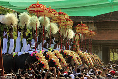 MG_3577 (PRATHAPSTOCKIMAGE) Tags: india elephant festival canon religion decoration kerala trissur pooram nettipattom eos60d