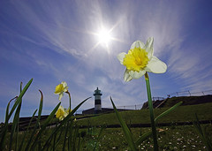 Daffodils by the lighthouse ............ [Explore] #22 24/04/2013 (southseadave) Tags: sun clouds daisies fence portsmouth daffodils southsea sigma1020mm a65 southseacastle southsealighthouse alpha65