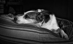 bw dog review australia newsouthwales doginbed fujifilmfinepixx100