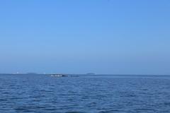 (liisatuulia) Tags: porkkala gulfoffinland birds blue sea water cormorant merimetso